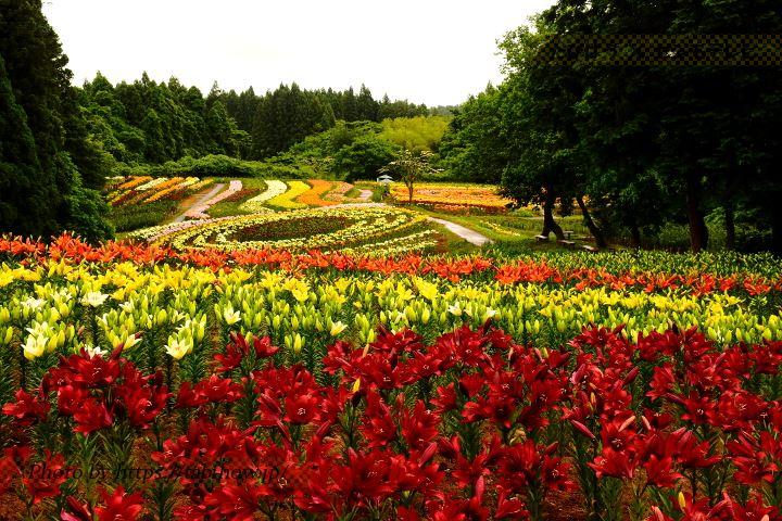 宮城県の花特集