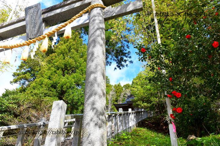大嶋神社の椿