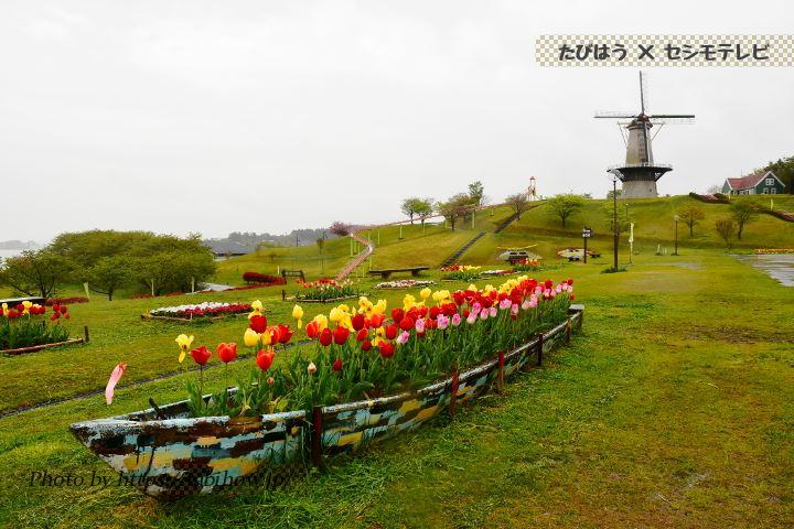 長沼フートピア公園のチューリップ