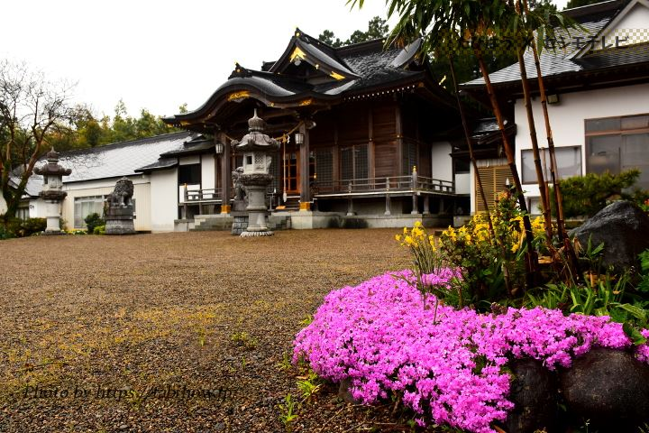 薬莱神社の芝桜