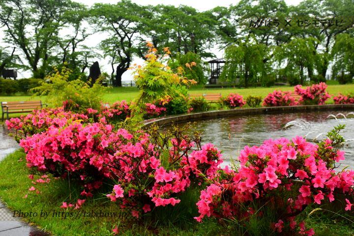 桂城公園のツツジ