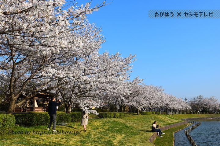 茨城県のコスモス