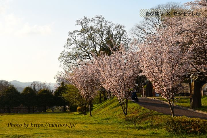 嘉多山公園の桜