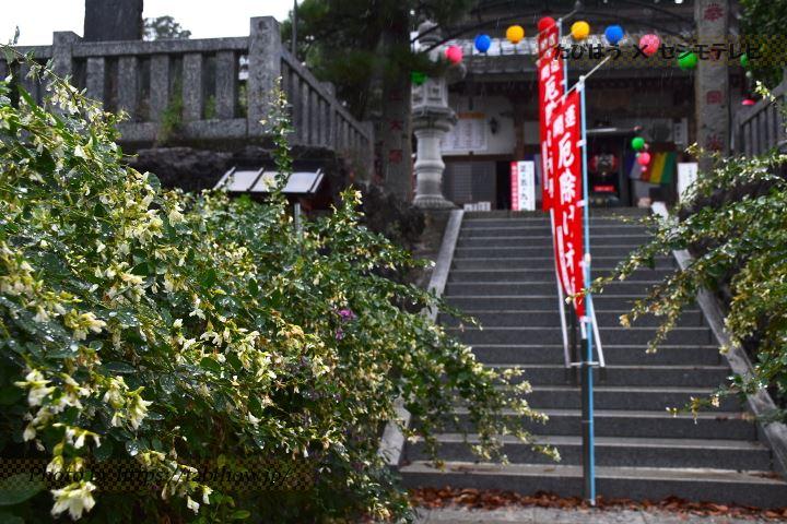 寺岡山元三大師のハギ