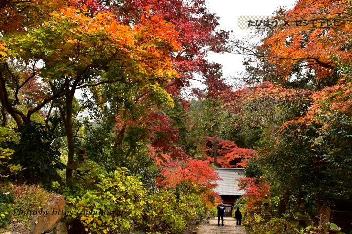太平山の紅葉