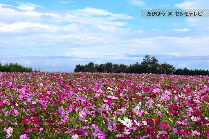群馬県の花特集