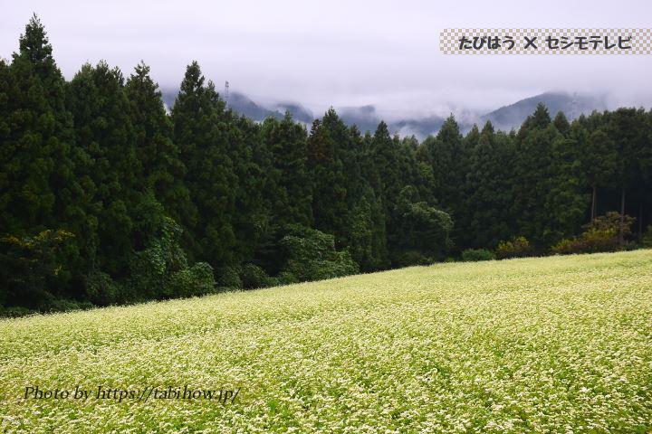 行幸田地区のソバの花
