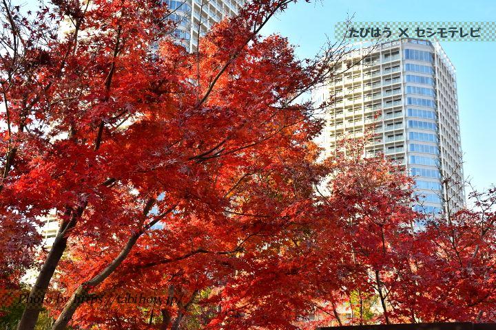 帰真園の紅葉