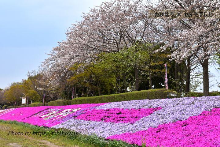 相武台下の桜