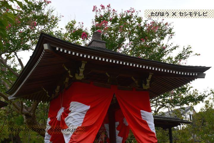常泉寺のサルスベリ