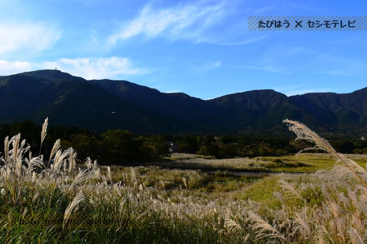 県立諏訪の原公園のススキ
