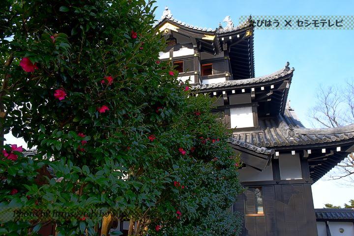 高田公園の椿