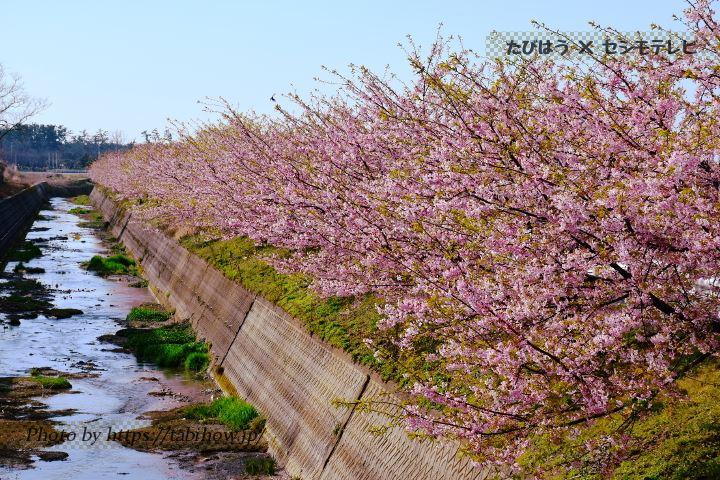 石川県のスイレン