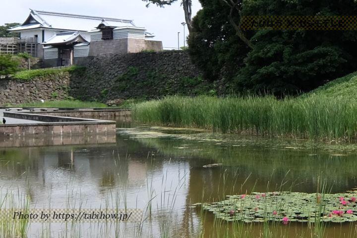 金沢城公園のスイレン