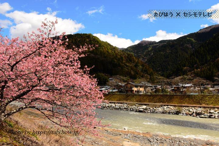 遠山の早桜、河津桜