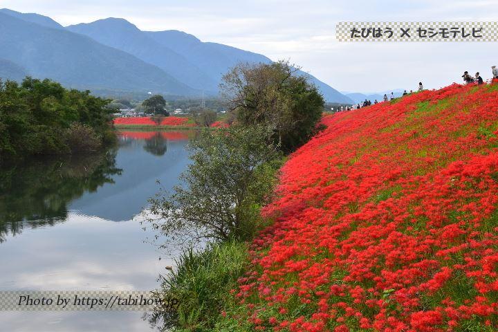 岐阜県の花特集