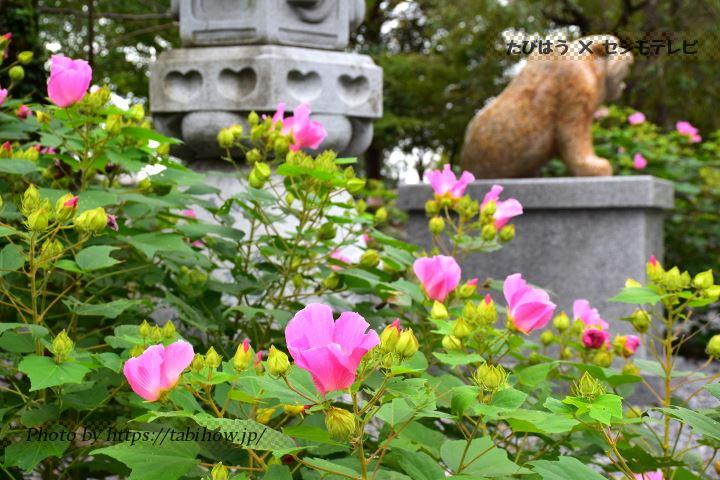 金生山明星輪寺の芙蓉