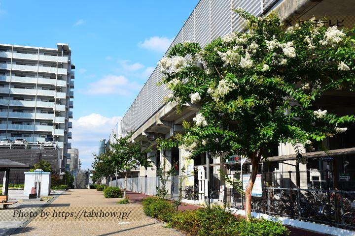 勝川駅前のサルスベリ
