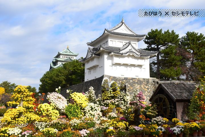 名古屋城の菊