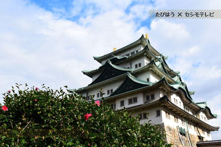 名古屋城のさざんか