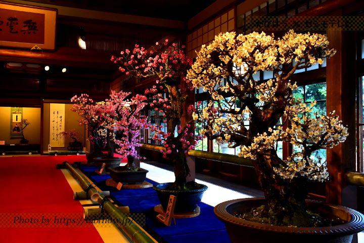 滋賀県の花特集