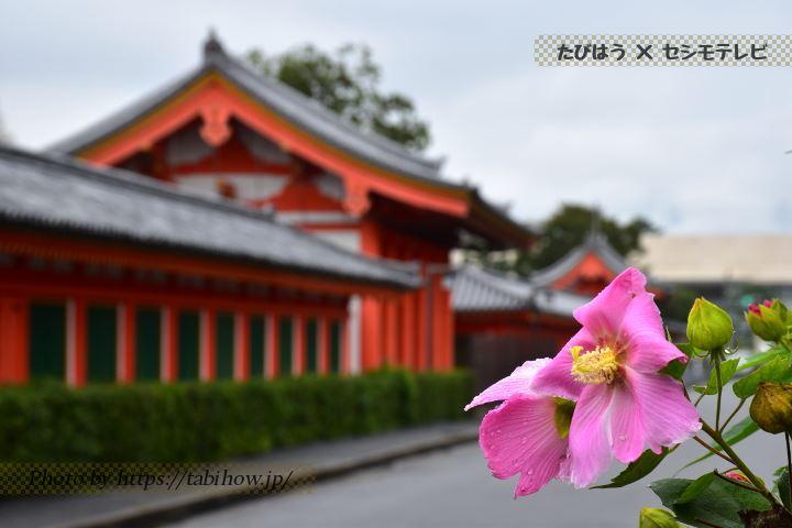 法住寺の芙蓉
