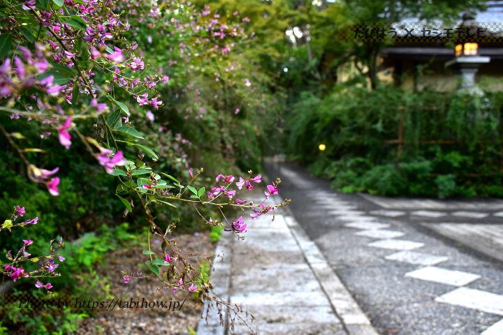 梨木神社のハギ