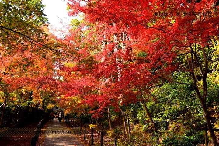 勧修寺の紅葉