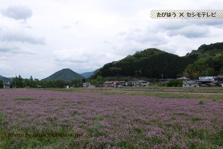 野上野のレンゲ