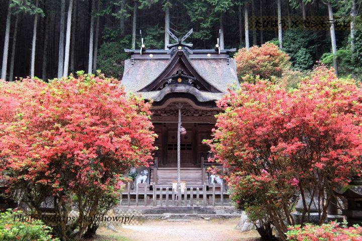 一の宮神社のツツジ