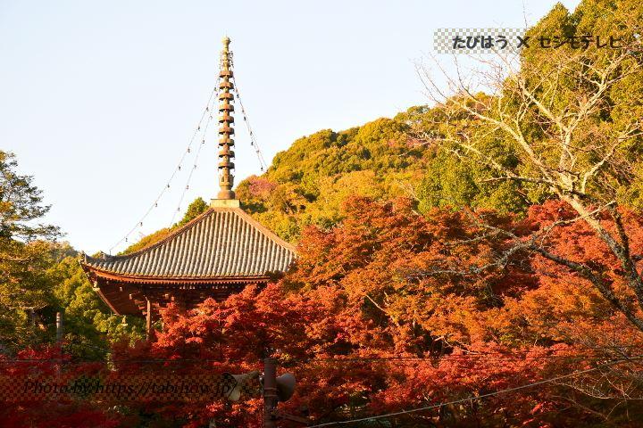 和歌山県の棚田