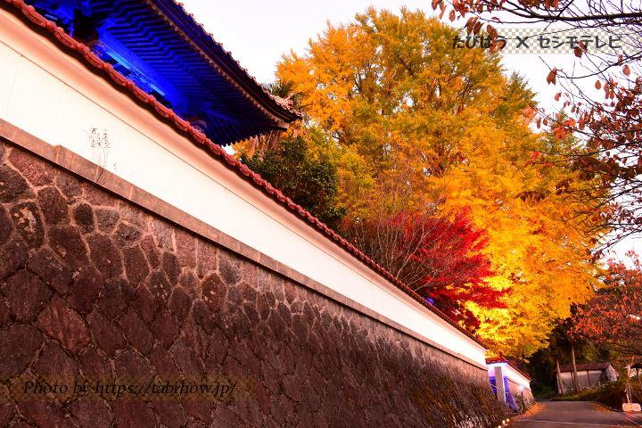 浄善寺のイチョウ