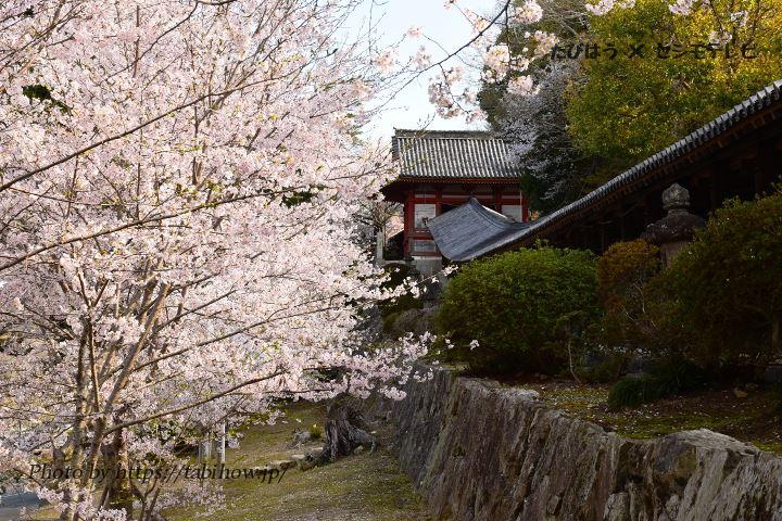 岡山県の花特集