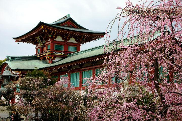 山口県の花特集