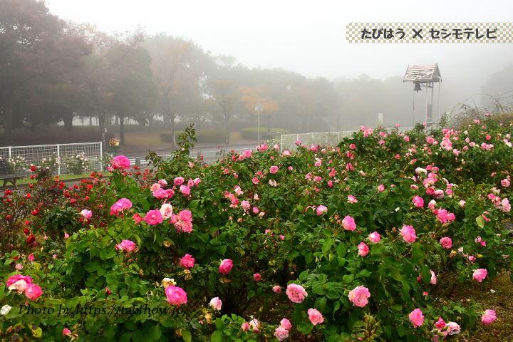 蜂ヶ峯総合公園の秋バラ