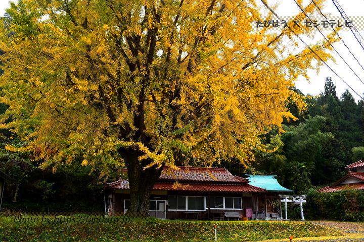大野神社のイチョウ