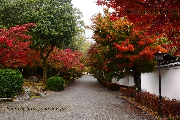 紅葉谷公園の紅葉