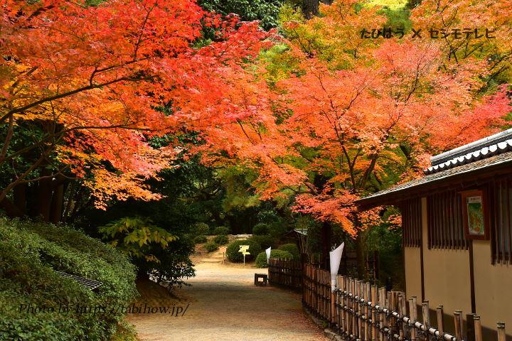 香川県の紅葉