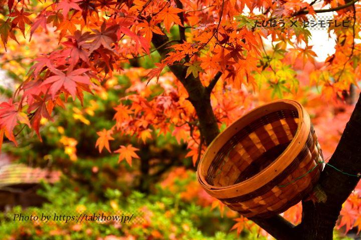 愛媛県の紅葉