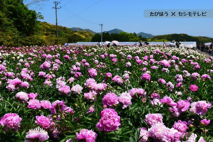 高知県の花の名所