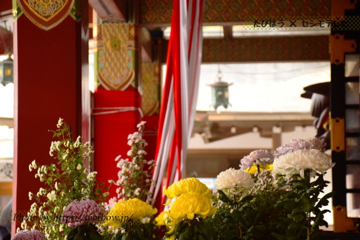 祐徳稲荷神社の菊