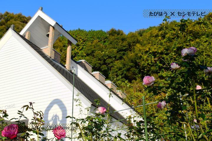 ホテル龍登園の秋バラ