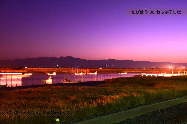 芦刈海岸のススキ