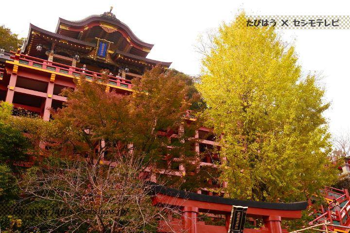 祐徳稲荷神社のイチョウ