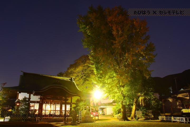 小浜神社のイチョウ