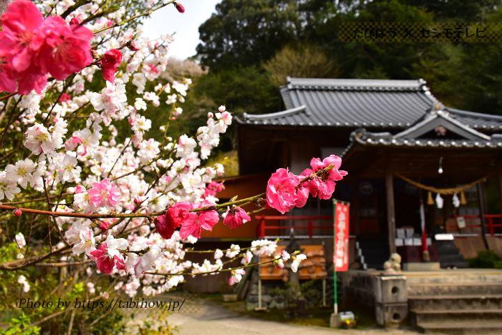 一勝地阿蘇神社の桃