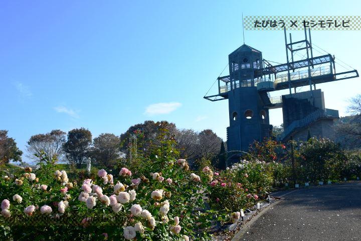 カントリーパークの秋バラ
