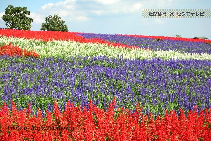 大分県の花特集