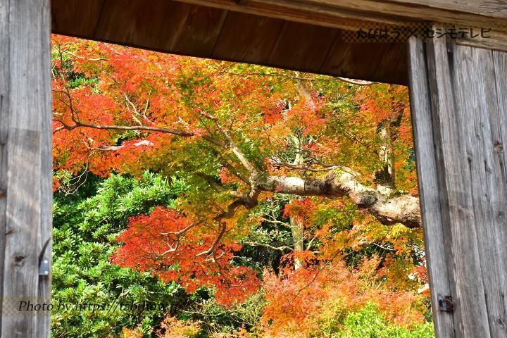 旧吉松家住宅の紅葉