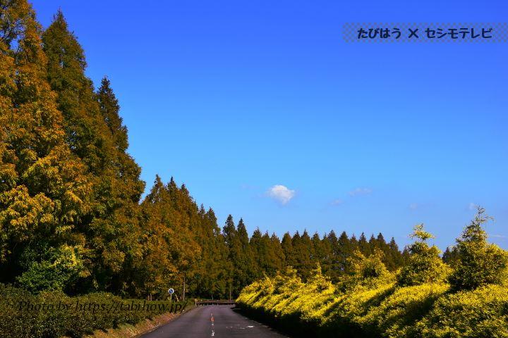 生駒高原のメタセコイア
